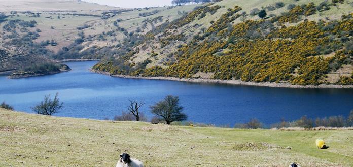 Guided Walks on Dartmoor